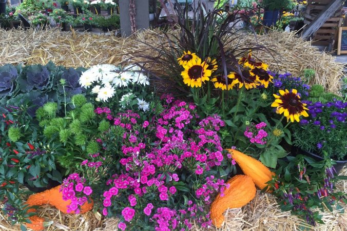 mums, asters, and gourds