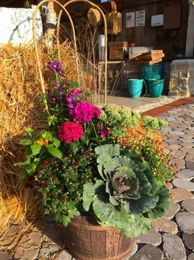 Summer Pots