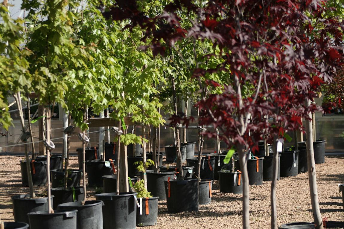 Hartman Companies Tree Farm